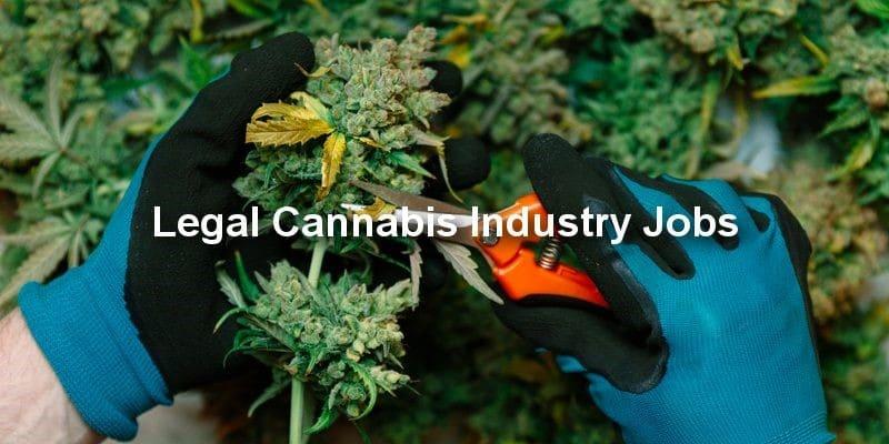 Legal Cannabis Jobs