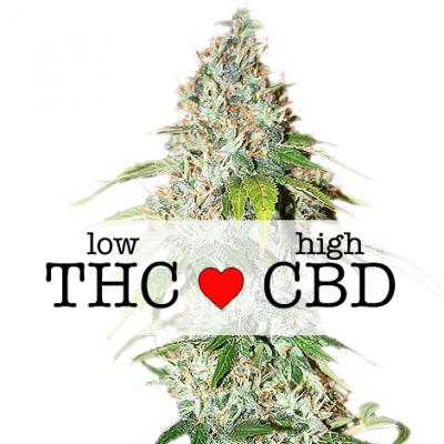 OG Kush CBD Cannabis Strain