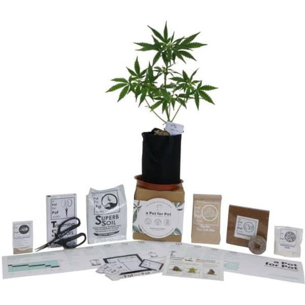 cannabis growing kit mini