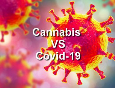 Researchers Look Into Marijuana As A Potential COVID-19 Treatment