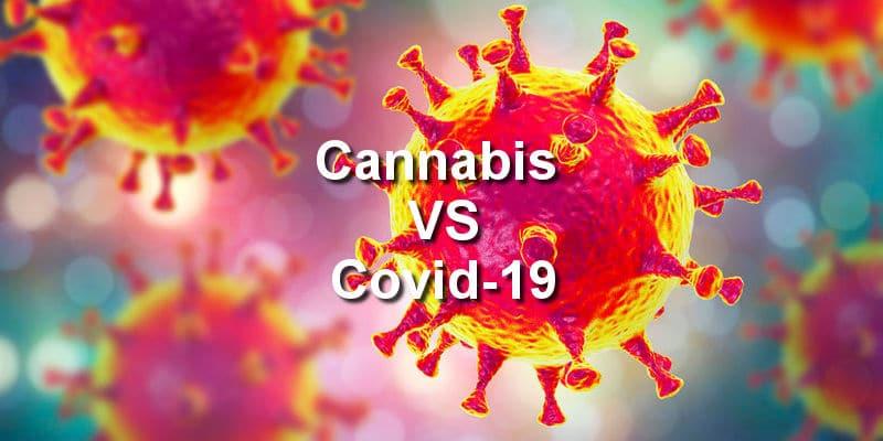 Researchers Look Into Marijuana As A Potential COVID-19 Treatment