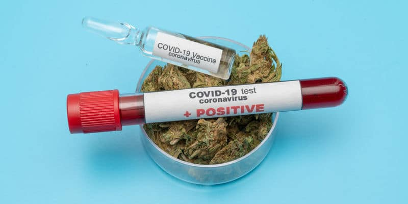 "Doctors Say ""Smoking Cannabis Raises COVID-19 Risk"""
