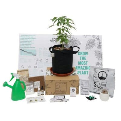 Cannabis Growing Kit Small