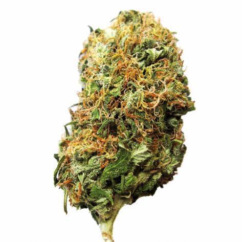 Bif Bud Cannabis Bud