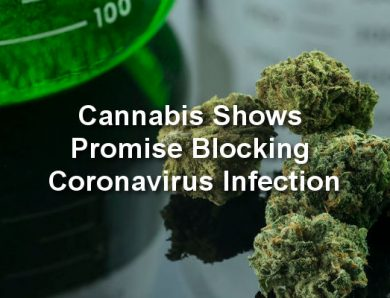 Alberta Researcher – Cannabis Shows Promise Blocking Coronavirus Infection