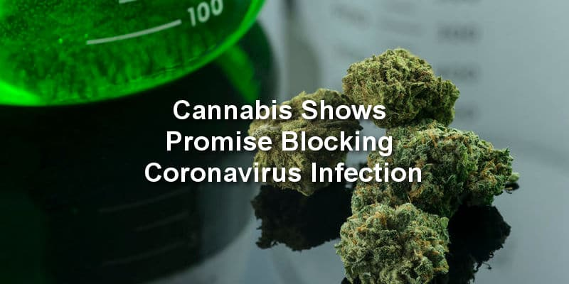 Alberta Researcher – Cannabis Shows Promise Blocking Coronavirus Infection