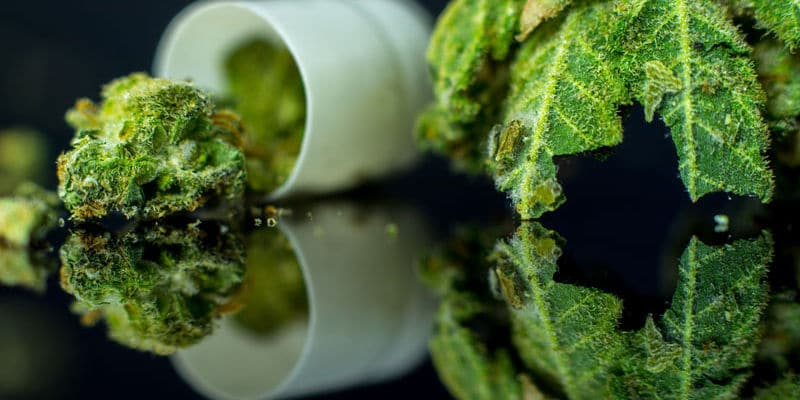 States With Medical Marijuana Laws Saw 20% Drop In Some Opioid Prescriptions
