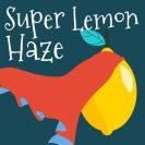 Super lemon haze seedsupreme